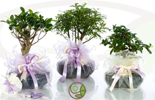 """Featured image for """"Bomboniere eco-friendly belle originali e utili"""""""