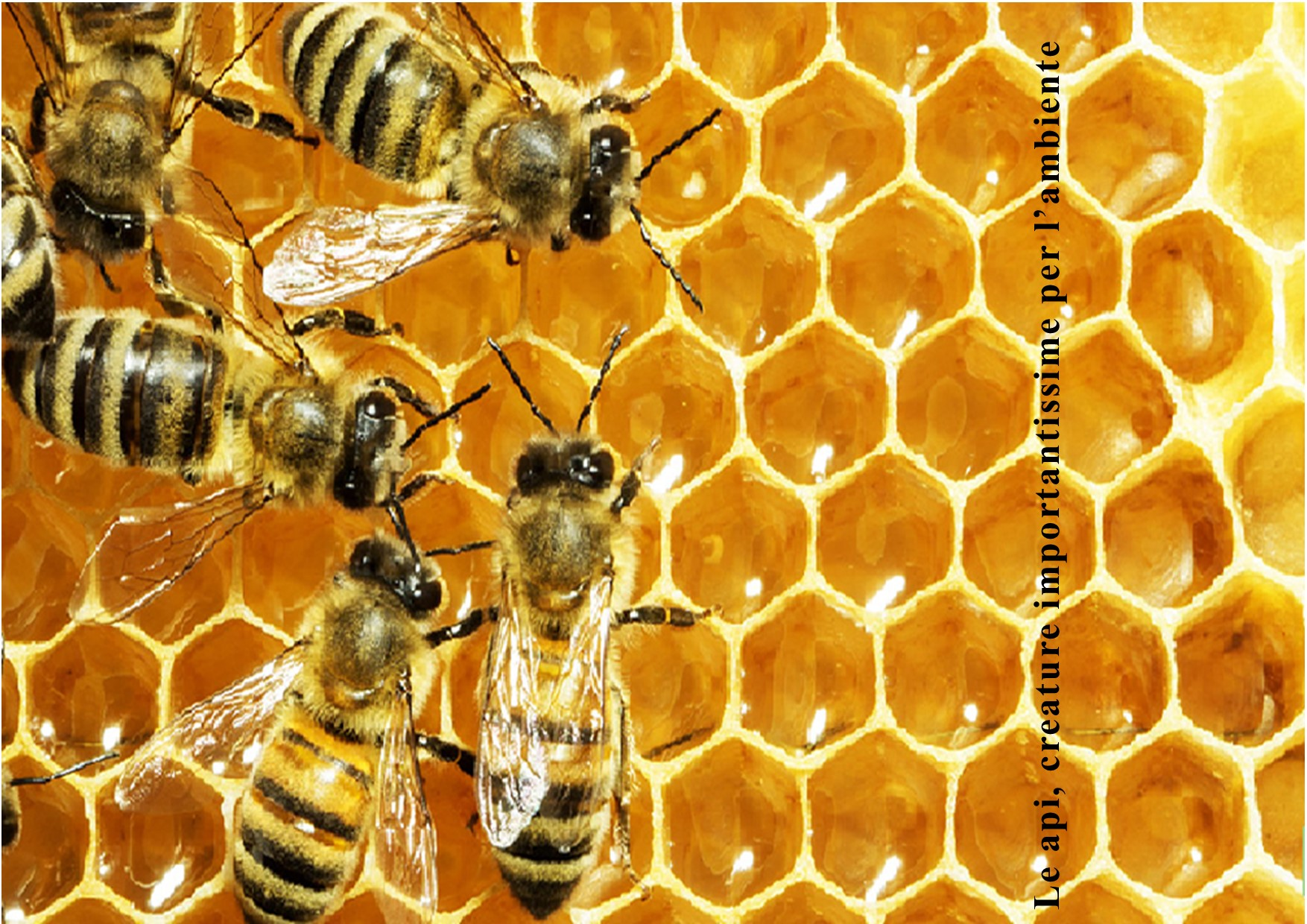 "Featured image for ""Le api, creature importantissime per l'ambiente"""