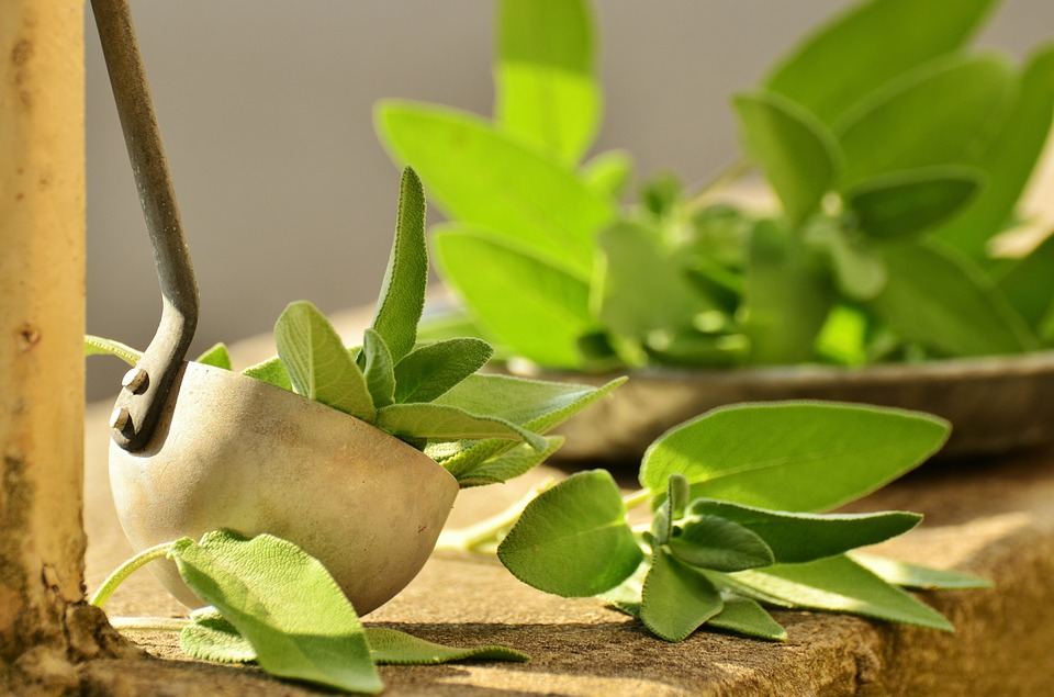 "Featured image for ""Salvia, perché è considerata da sempre l'erba sacra?"""